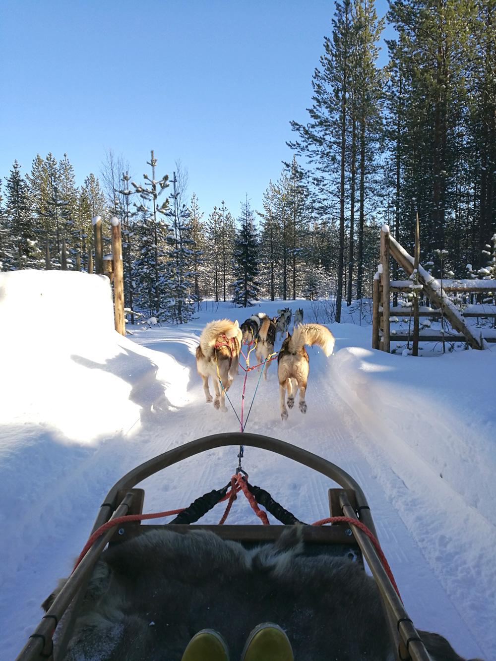 Huskypark2_Joulupukin_pajakylä_Rovaniemi_Parasta_matkalla_blogi